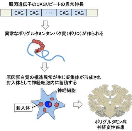 小脳 リハビリ 症 脊髄 変性
